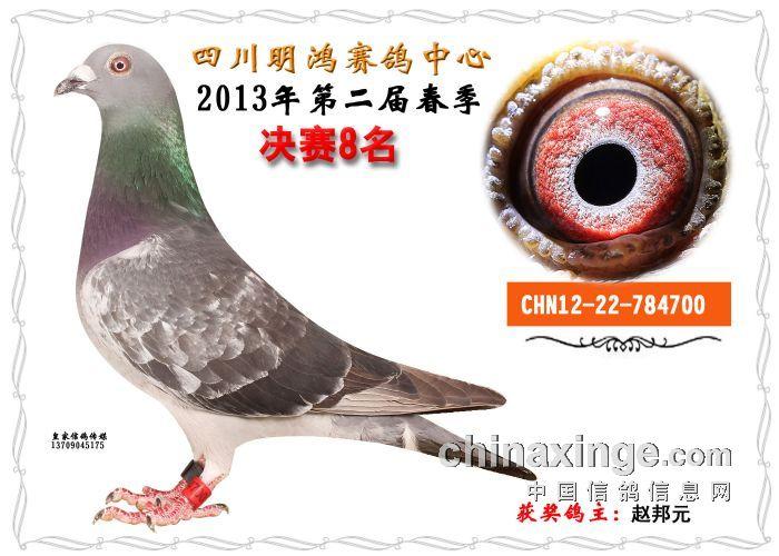 四川明鸿赛鸽中心获奖鸽眼沙羽色小结