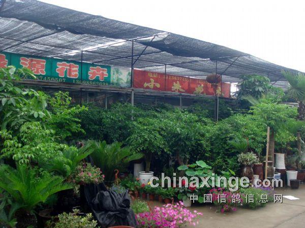 游 宁波三市花鸟市场