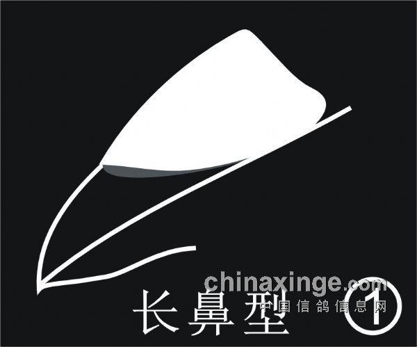根据信鸽鼻型划分品种(图)