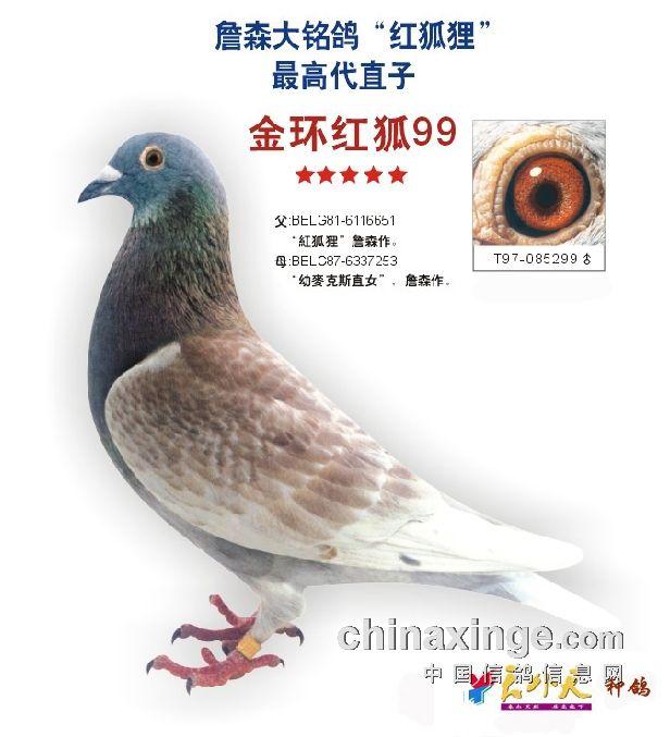 鸽子鸽鸟类动物图示鸟教学616_677ft蝙蝠魔腿转不动图片