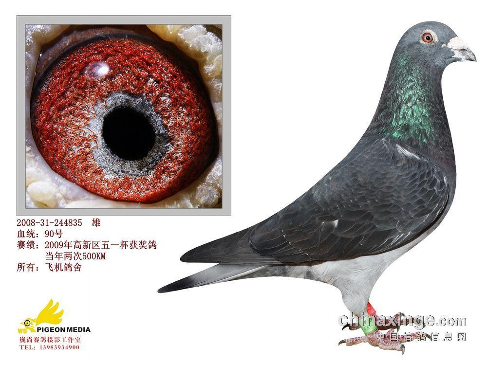 重庆飞机鸽舍种鸽图片欣赏