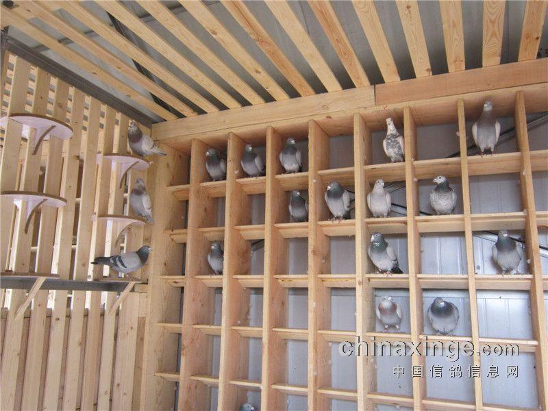 2014年1月9号,本人带着学习参观的态度,走访了江苏于氏鸽业。初冬的天气还是比较寒冷的,但是一想到去看看鸽子,欣赏下冠军,冷意去了大半。 来到于氏鸽业楼下,就看见了新建的赛鸽棚。全长12米,木钢结构,台式设计! 下面,是本人用相机记录下的本次走访过程! 江苏于氏鸽业近年五台山公棚赛绩: 2008年五台山公棚决赛21位 (参赛3羽) 2009年五台山公棚决赛105、188位 (参赛5羽) 2010年五台山公棚决赛125、234位 (参赛4羽) 2011年五台山公棚决赛153、212位 (参赛4羽) 201