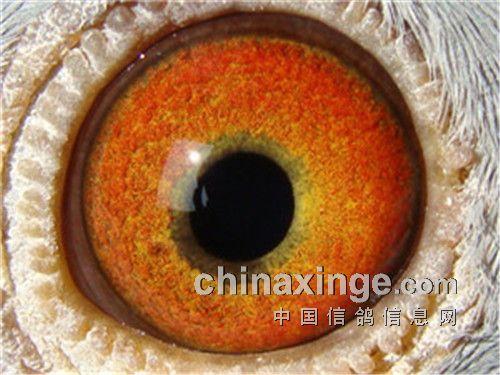 中国 太阳/4、利用相机的放大加功能,切除你需要的鸽眼。这样就可以制作你...