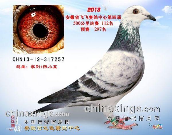 动物 鸽 鸽子 教学图示 鸟 鸟类 600_472