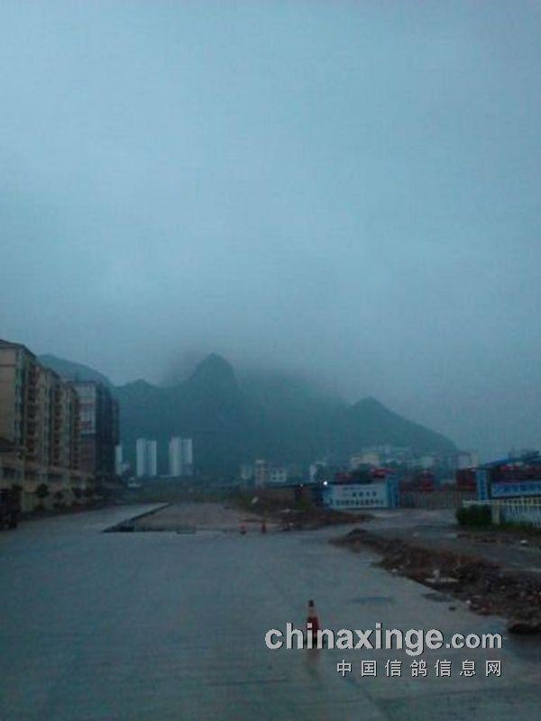 东光超远程 比赛即时信息 图片 中国信鸽 信息网