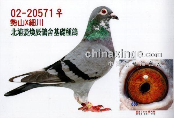 鸽眼结构图片说明