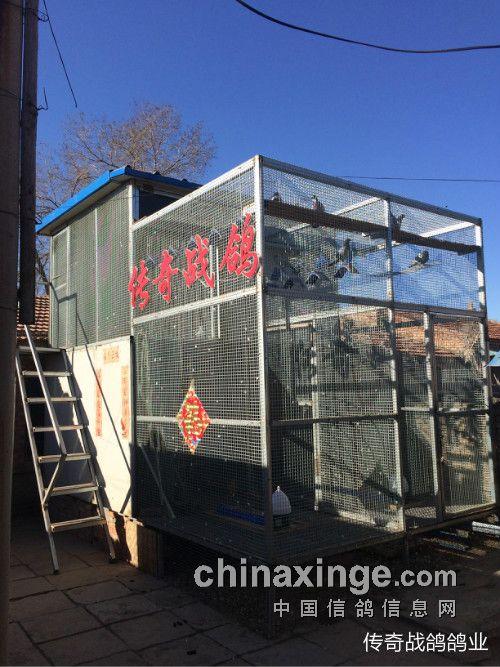 中国信鸽协会_鸽棚设计:空间有限的鸽友可参考(图)-中国信鸽信息网