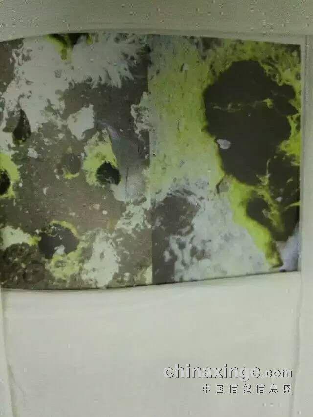 鸽子粪便疾病图-中国信鸽信息网图片