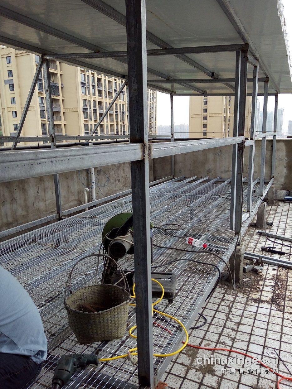 阳台养鸽子的设计图片