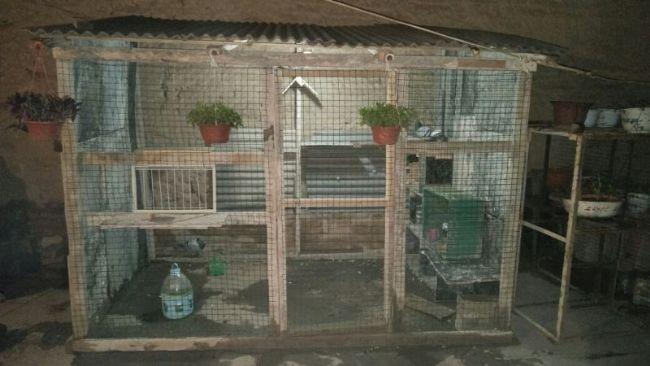 在自家的院子里找个空地     于是建设了一间简易鸽舍,建的不好请见谅
