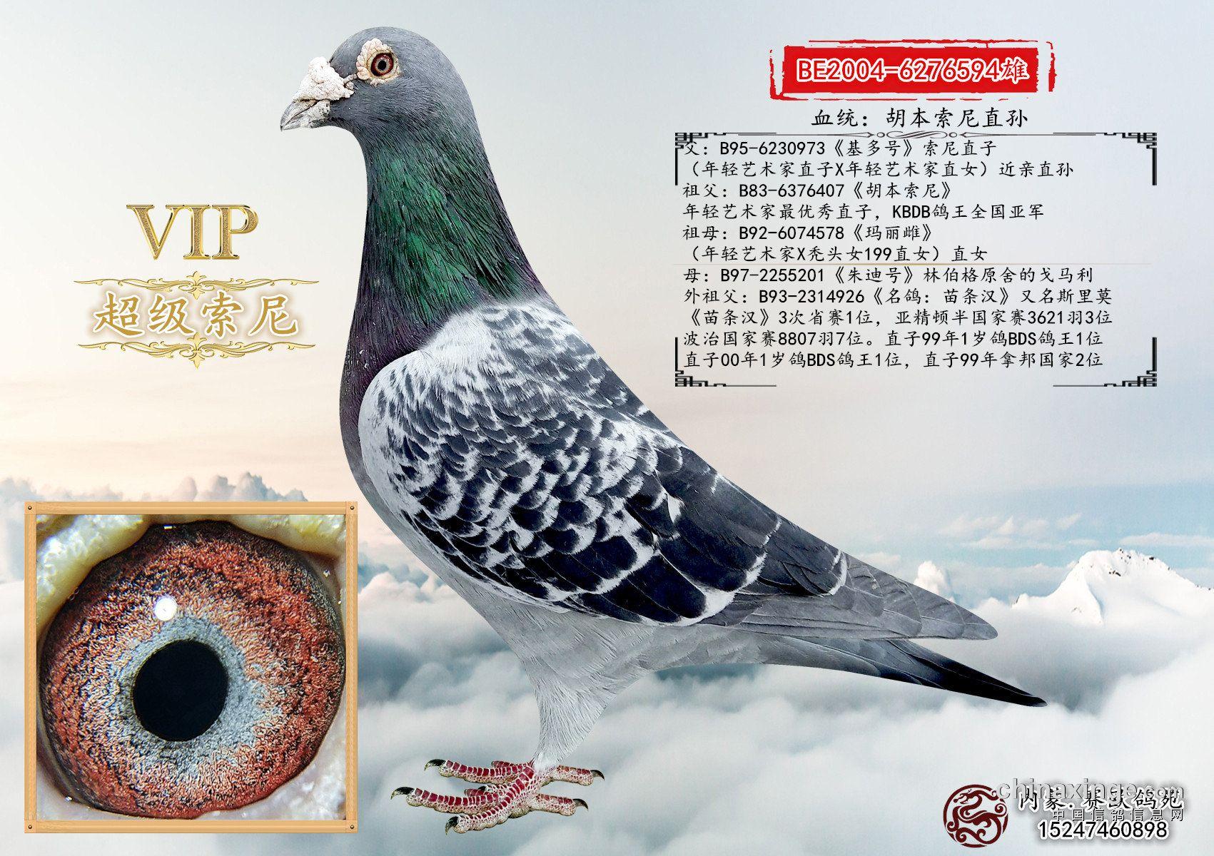 鸟类鸽鸽子蝴蝶图示鸟动物1701_1200教学也是破茧而出么图片