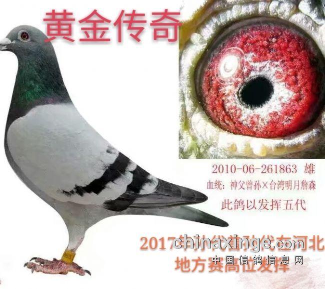 比赛不可少的步骤-同花顺鸽苑-中国信鸽信息网 www.