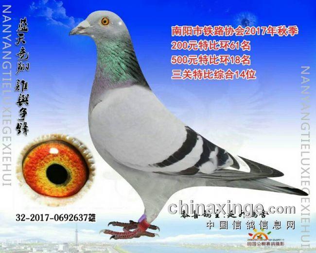 三关鸽王14名芬尼卡5000