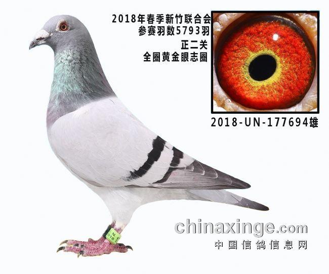 2018年台鸽