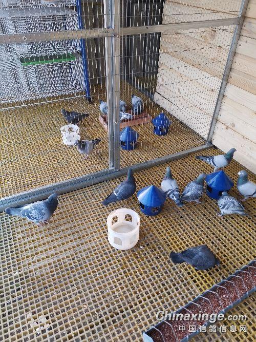 自己画图施工 想了几年的鸽舍终于建成