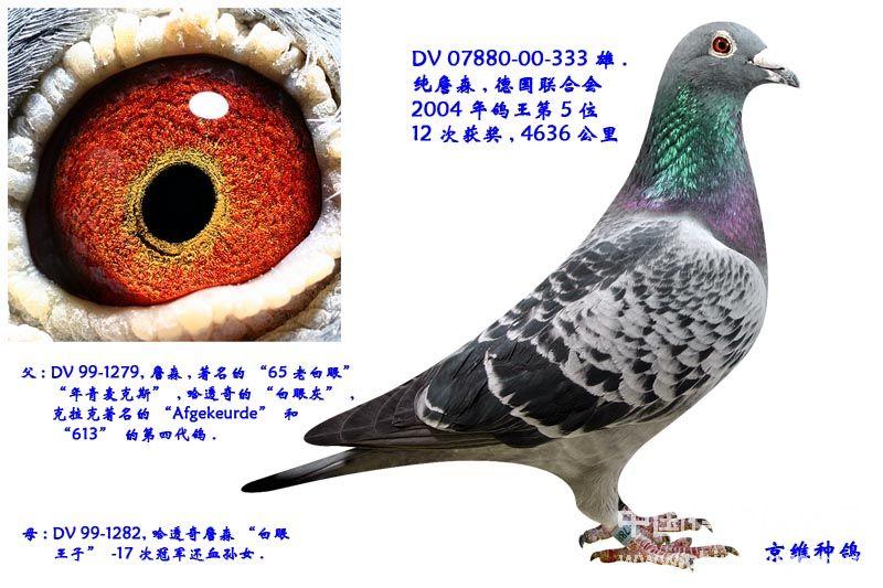 超级鸽眼结构图