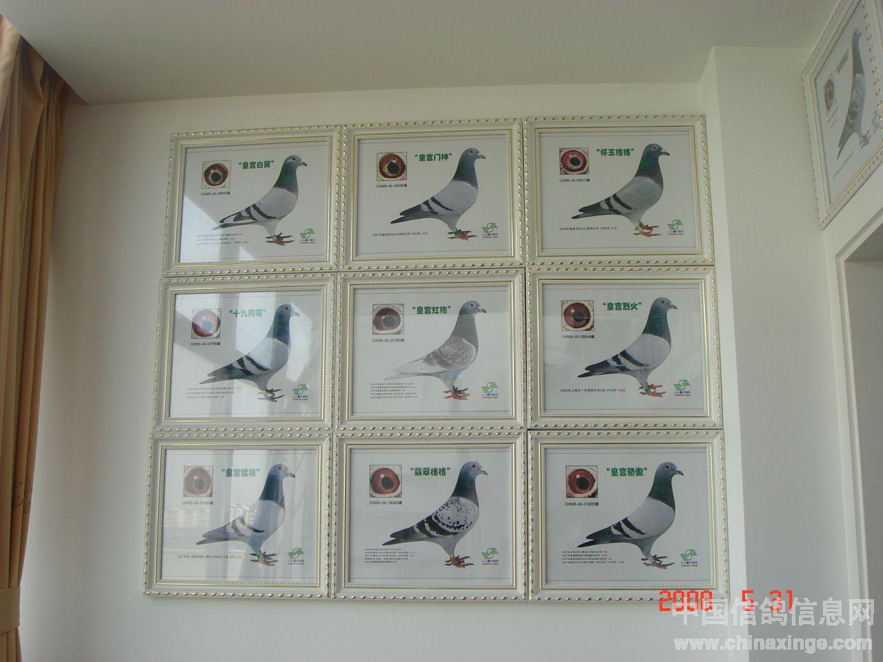 种鸽鸽棚设计图