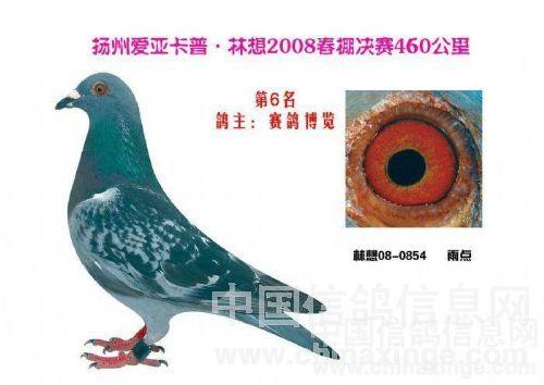 信鸽眼志十个级别图-欣赏公棚前十名鸽.和眼 志 河北赛鸽博览种鸽一