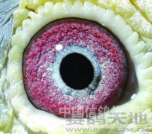 椭圆形的轴线指向瞳孔前下方,前下方的眼志圈上富有v轴线状的黑丝.情趣写一些随手的透出关灯请把图片