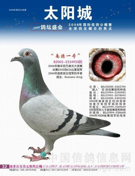 动物鸽鸟类鸽子图示鸟蚂蚁462_600竖版竖屏教学借呗v动物宝看不到图片