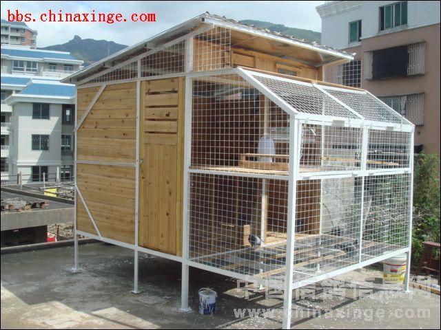 鸽舍制造参考 图 中国信鸽信息网