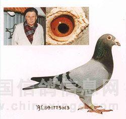 """克拉克/克拉克几十年如一日培育出许许多多超一流的赛鸽,但""""613""""是..."""