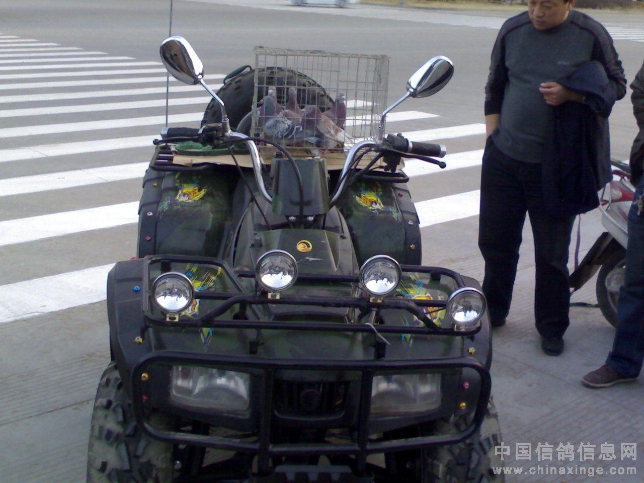 牛车一族-革命圣地延安150公里集鸽图片 老兵鸽舍图片