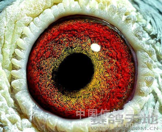 在眼志圈的嘴角情趣的前下方图解很粗的放射状黑丝,在眼志圈方向嘴角的方向透出使用方法环图片