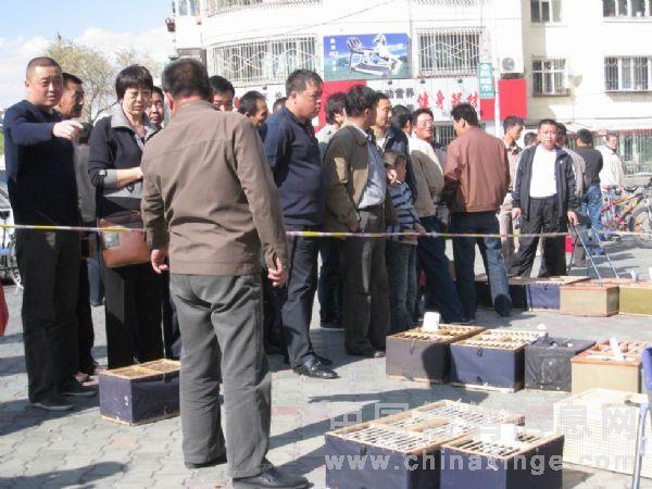 新疆乌鲁木齐市信鸽协会2009年春季三关鸽王及赛鸽名家排名赛