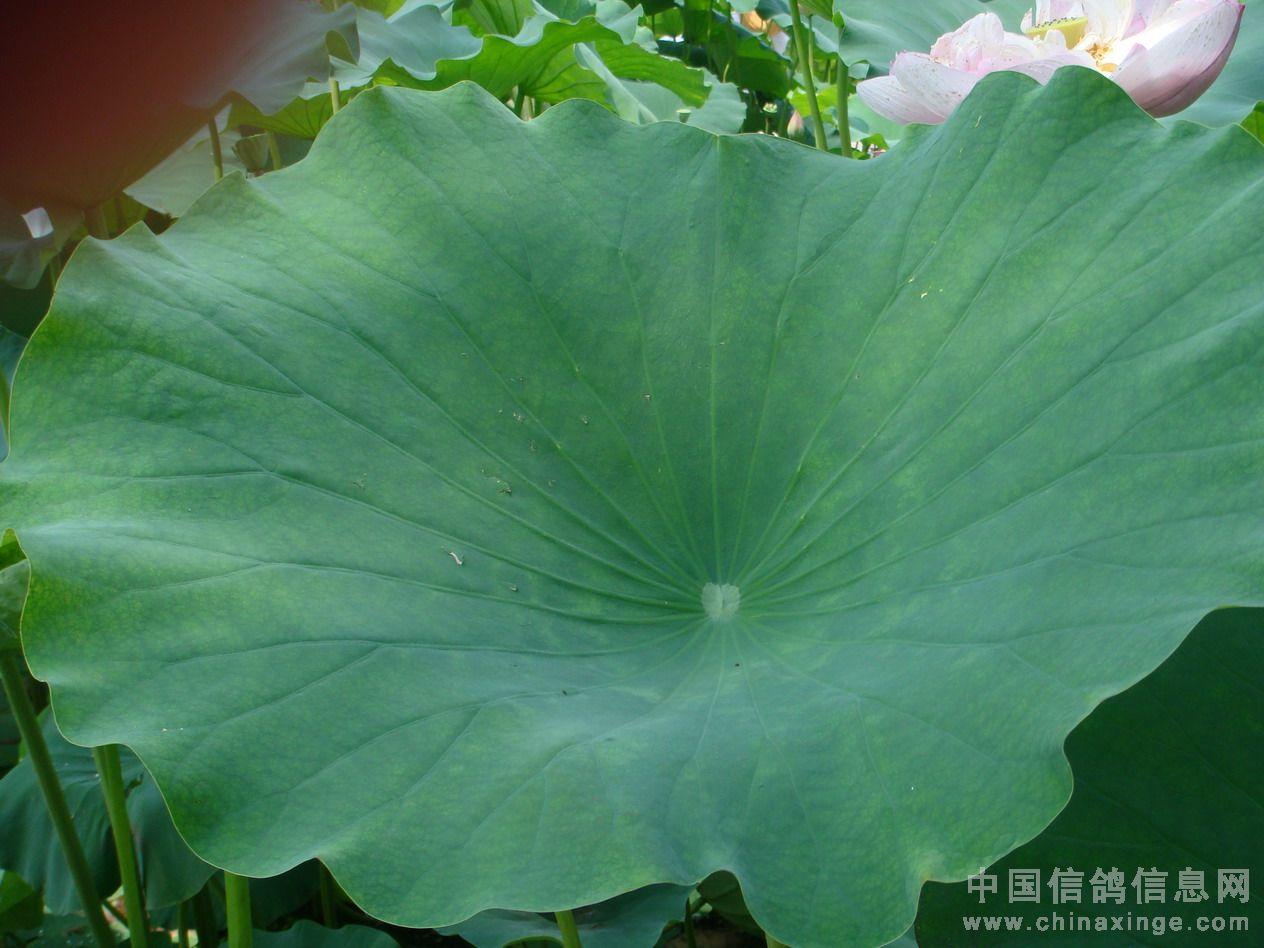 背景 壁纸 花 绿色 绿叶 树叶 植物 桌面 1264_948