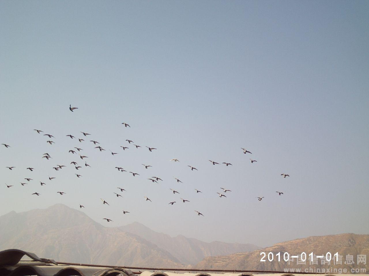一群飞翔和平鸽简笔画