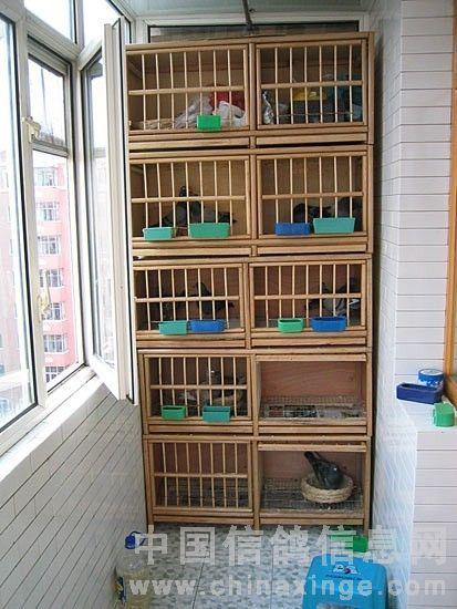阳台鸽棚设计的几点把握图片