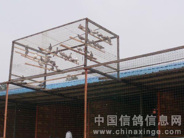 公棚采用全钢结构