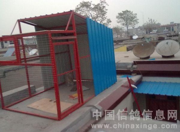 新建的小赛鸽棚-中国信鸽信息网 www.chinaxinge.com图片