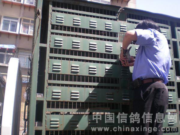济南铁路2011年第十二届信鸽国家赛集鸽现场【图