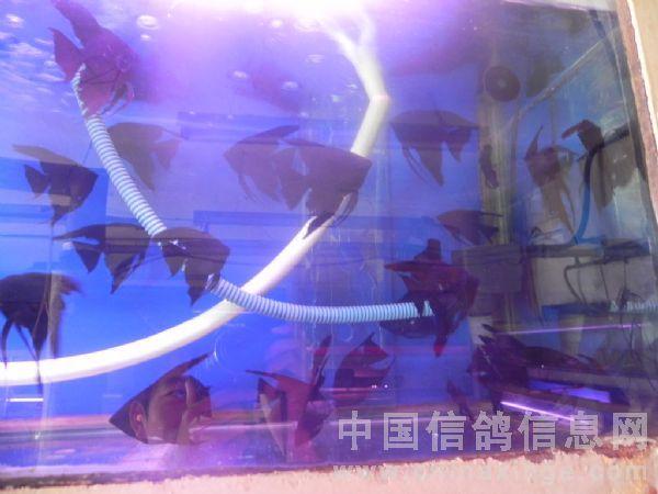 壁纸 海底 海底世界 海洋馆 水族馆 600_450