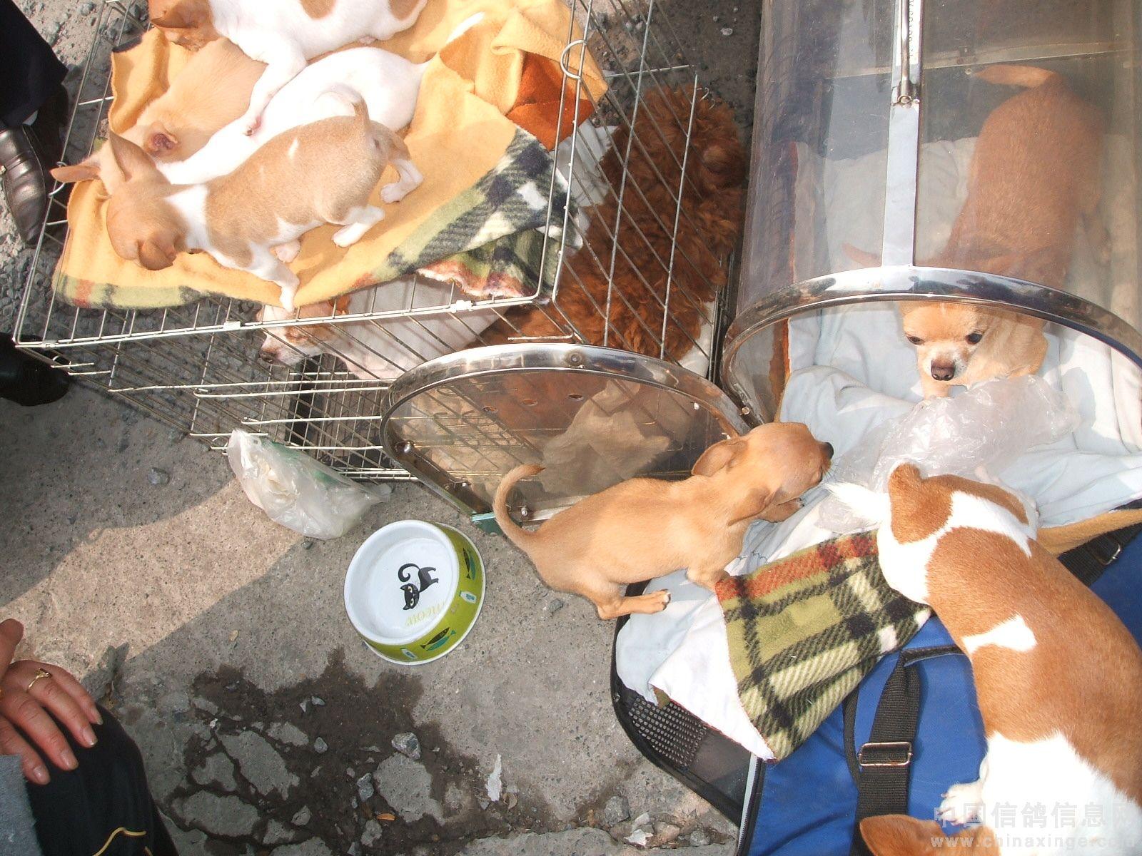 郑州/狗的品种真多,只是咱叫不出来。...