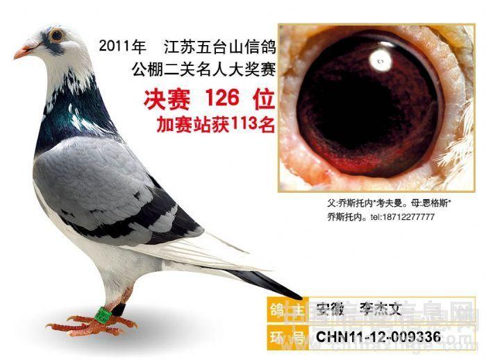 养鸽子养了二十多年,其间断断续续,但人一直没有离开这个圈子,所以自己是一直看着中国的信鸽运动走到今天。最有趣的是,随着大家对鸽子和赛鸽运动的研究越来越深入,鸽友对鸽子选择的喜恶也几经变化,但很多都很模式化,甚至有些荒谬。最近就几次看到有著名鸽友写文章歧视蝴蝶花。大概意思就是说这种羽色的鸽子遗传有问题,养这种羽色鸽的人也是很土不够专业。殊不知文章好写,大笔一挥,却不知也许多少生命无辜受牵就此丧命刀下,真是罪过啊。我感觉羽色歧视或者羽色偏好这种认知有点像种族歧视的观念,仅仅因为一个人的肤色,就否定一个人甚至是