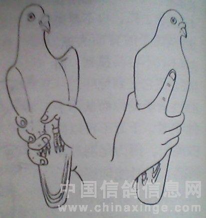 信鸽简笔画步骤