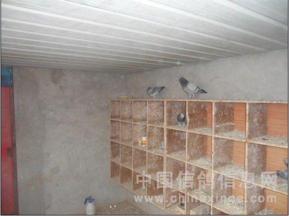 (右侧)   跳笼上面的鸽子   左侧的种鸽棚   右侧的种鸽棚   大跳笼内部 图片