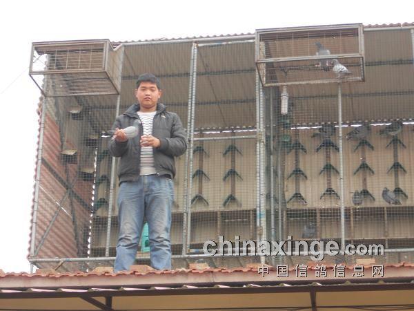 三营信鸽协会_宁夏固原市原州区三营镇金土豆文体信鸽协会