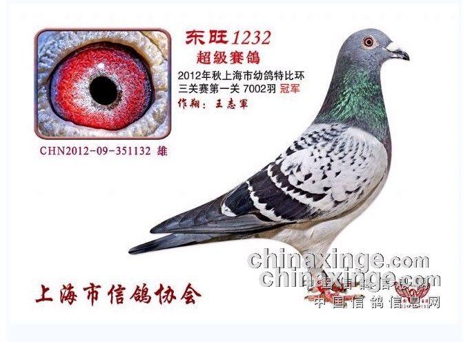 """钟卫海的2011-0                  2012年上海市信鸽协会幼鸽特比环"""""""