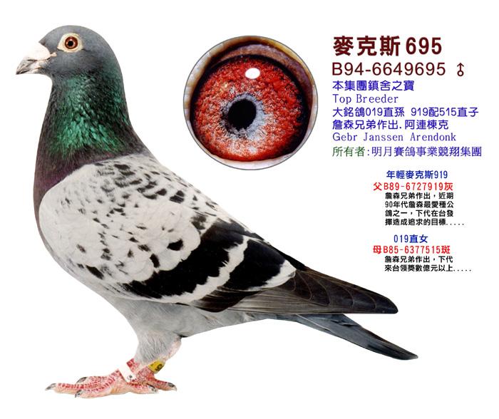 动物鸽蜜蜂鸟类图示鸟教学700_588粉盒脱鸽子图片