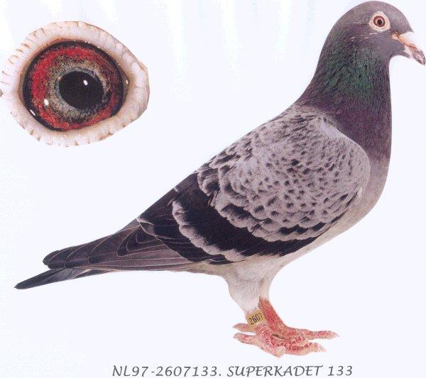 鸟类鸽仓鼠鸽子图示鸟教学600_533亚克力动物笼太热图片