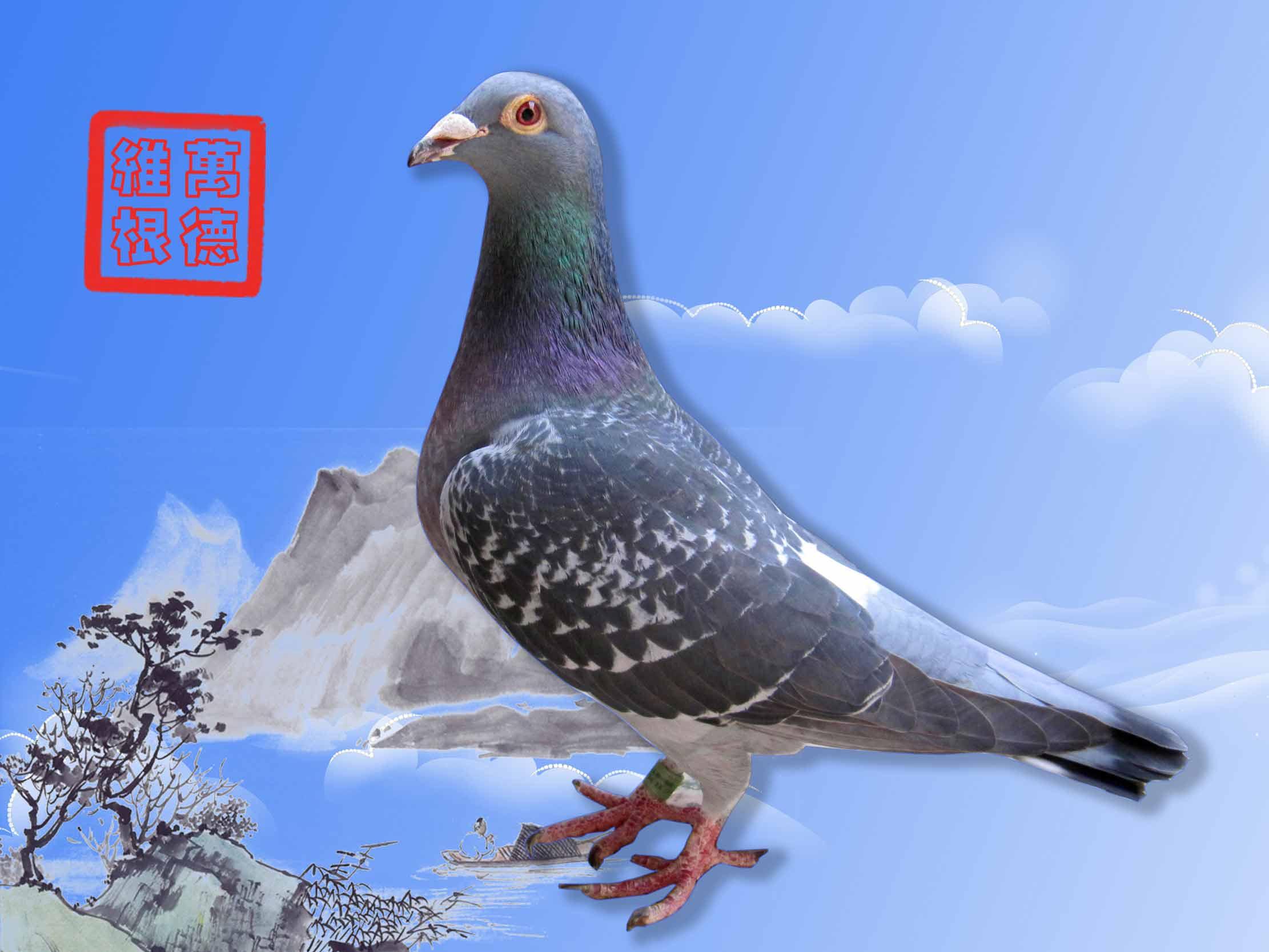 鸽舍活动门设计图片