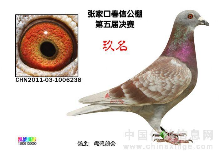 巨鸽pa800微型电动葫芦接线图
