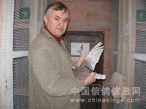 赵县农村鸽舍 中国信鸽信息网 www.chinaxinge